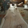 樹齢200余の杉材。収納ローカウンターの天板にします。